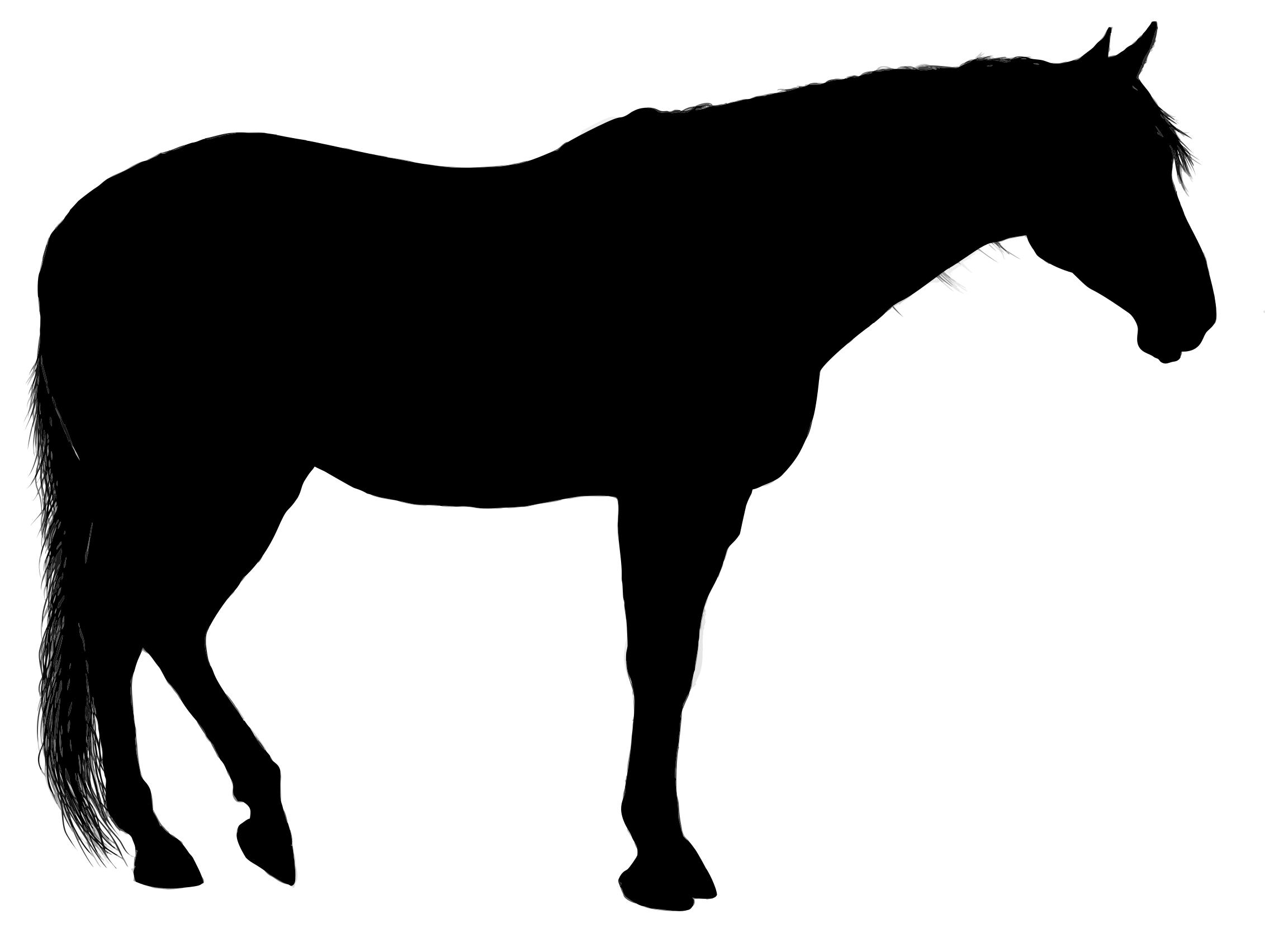 silhouette black horse standing