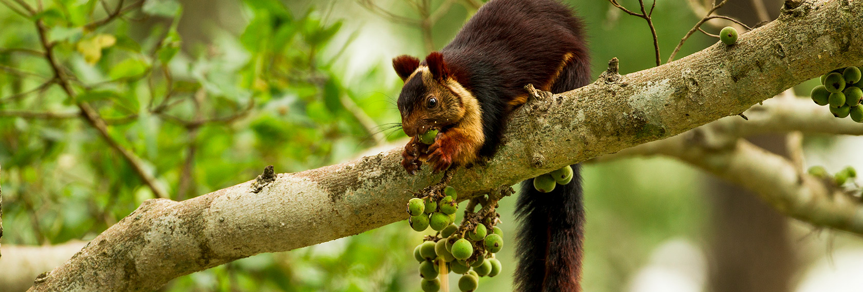 Nature: A Squirrel's Guide to Success - lg slider