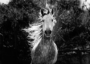 Nature: Equus: Story of the Horse - tab